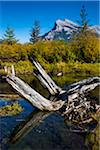 Tree Stump in Vermilion Lakes with Mount Rundle in Background, near Banff, Banff National Park, Alberta, Canada Stock Photo - Premium Rights-Managed, Artist: R. Ian Lloyd, Code: 700-06465458