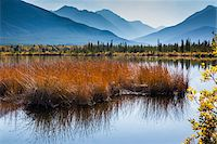 fall trees lake - Long Grass in Vermilion Lakes with Mountain Range in Background, near Banff, Banff National Park, Alberta, Canada Stock Photo - Premium Rights-Managednull, Code: 700-06465461