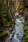 Johnston Canyon Rushing Through Forest, Banff National Park, Alberta, Canada Stock Photo - Premium Rights-Managed, Artist: R. Ian Lloyd, Code: 700-06465470