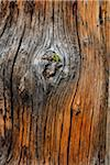 Close-Up of Tree Trunk, Rock Isle Trail, Sunshine Meadows, Mount Assiniboine Provincial Park, British Columbia, Canada Stock Photo - Premium Rights-Managed, Artist: R. Ian Lloyd, Code: 700-06465491