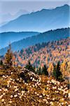 Mountain Range and Autumn Larch Along Rock Isle Trail, Sunshine Meadows, Mount Assiniboine Provincial Park, British Columbia, Canada Stock Photo - Premium Rights-Managed, Artist: R. Ian Lloyd, Code: 700-06465507