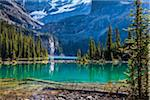 Evergreen Trees and Alpine Lake at Base of Mountains, Lake O'Hara, Yoho National Park, British Columbia, Canada Stock Photo - Premium Rights-Managed, Artist: R. Ian Lloyd, Code: 700-06465513