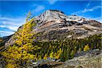 Mountain and Autumn Larch, Lake McArthur Trail, Yoho National Park, British Columbia, Canada Stock Photo - Premium Rights-Managed, Artist: R. Ian Lloyd, Code: 700-06465527