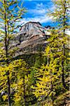 Mountain and Autumn Larch, Lake McArthur Trail, Yoho National Park, British Columbia, Canada Stock Photo - Premium Rights-Managed, Artist: R. Ian Lloyd, Code: 700-06465528