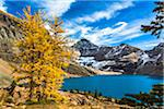 Autumn Larch at McArthur Lake, Yoho National Park, British Columbia, Canada Stock Photo - Premium Rights-Managed, Artist: R. Ian Lloyd, Code: 700-06465548