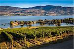 Vineyard in Kelowna, British Columbia, Canada Stock Photo - Premium Rights-Managed, Artist: R. Ian Lloyd, Code: 700-06465568
