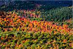 Aerial View of Forest in Autumn, Whiteface Mountain, Wilmington, Essex County, New York State, USA Stock Photo - Premium Rights-Managed, Artist: R. Ian Lloyd, Code: 700-06465595