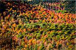 Aerial View of Forest in Autumn, Whiteface Mountain, Wilmington, Essex County, New York State, USA Stock Photo - Premium Rights-Managed, Artist: R. Ian Lloyd, Code: 700-06465596