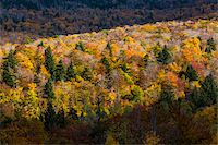 Overview of Forest in Autumn, Smugglers Notch, Lamoille County, Vermont, USA Stock Photo - Premium Rights-Managednull, Code: 700-06465607