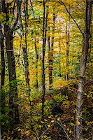 Forest Trees in Autumn, Smugglers Notch, Lamoille County, Vermont, USA Stock Photo - Premium Rights-Managednull, Code: 700-06465614