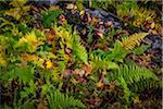 Ferns and Fallen Tree on Forest Floor Stock Photo - Premium Rights-Managed, Artist: R. Ian Lloyd, Code: 700-06465618