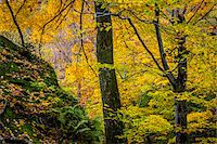 Forest Scene in Autumn, Smugglers Notch, Lamoille County, Vermont, USA Stock Photo - Premium Rights-Managednull, Code: 700-06465629