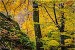 Forest Scene in Autumn, Smugglers Notch, Lamoille County, Vermont, USA Stock Photo - Premium Rights-Managed, Artist: R. Ian Lloyd, Code: 700-06465629