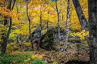 Boulders in Forest in Autumn, Smugglers Notch, Lamoille County, Vermont, USA Stock Photo - Premium Rights-Managednull, Code: 700-06465631