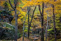 Boulders and Tree Trunks in Forest in Autumn, Smugglers Notch, Lamoille County, Vermont, USA Stock Photo - Premium Rights-Managednull, Code: 700-06465633