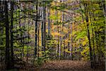 Hiking Trail Through Forest in Autumn, Moss Glen Falls Natural Area, C.C. Putnam State Forest, Lamoille County, Vermont, USA Stock Photo - Premium Rights-Managed, Artist: R. Ian Lloyd, Code: 700-06465635