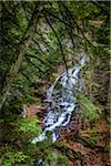 Waterfall and Evergreen Trees, Moss Glen Falls Natural Area, C.C. Putnam State Forest, Lamoille County, Vermont, USA Stock Photo - Premium Rights-Managed, Artist: R. Ian Lloyd, Code: 700-06465638
