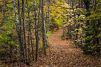 Hiking Trail Through Forest in Autumn, Moss Glen Falls Natural Area, C.C. Putnam State Forest, Lamoille County, Vermont, USA Stock Photo - Premium Rights-Managednull, Code: 700-06465645