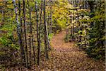 Hiking Trail Through Forest in Autumn, Moss Glen Falls Natural Area, C.C. Putnam State Forest, Lamoille County, Vermont, USA Stock Photo - Premium Rights-Managed, Artist: R. Ian Lloyd, Code: 700-06465645