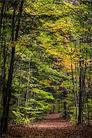 Hiking Trail Through Forest in Autumn, Moss Glen Falls Natural Area, C.C. Putnam State Forest, Lamoille County, Vermont, USA Stock Photo - Premium Rights-Managednull, Code: 700-06465648