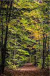 Hiking Trail Through Forest in Autumn, Moss Glen Falls Natural Area, C.C. Putnam State Forest, Lamoille County, Vermont, USA Stock Photo - Premium Rights-Managed, Artist: R. Ian Lloyd, Code: 700-06465648