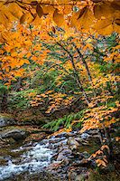 Rocky River and Autumn Leaves in Forest, Groton, Caledonia County, Vermont, USA Stock Photo - Premium Rights-Managednull, Code: 700-06465660