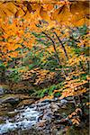 Rocky River and Autumn Leaves in Forest, Groton, Caledonia County, Vermont, USA Stock Photo - Premium Rights-Managed, Artist: R. Ian Lloyd, Code: 700-06465660