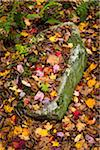 Rock Nestled Amongst Fallen Autumn Leaves on Ground Stock Photo - Premium Rights-Managed, Artist: R. Ian Lloyd, Code: 700-06465666