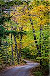 Fowlers Mill Road through Forest, near Chocorua Lake, Tamworth, New Hampshire, USA Stock Photo - Premium Rights-Managed, Artist: R. Ian Lloyd, Code: 700-06465673