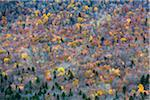 Trees with Autumn Leaves Interspersed with Bare Trees on Mountainside, White Mountain National Forest, White Mountains, New Hampshire, USA Stock Photo - Premium Rights-Managed, Artist: R. Ian Lloyd, Code: 700-06465679