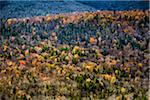 Trees with Autumn Leaves Interspersed with Bare Trees on Mountainside, White Mountain National Forest, White Mountains, New Hampshire, USA Stock Photo - Premium Rights-Managed, Artist: R. Ian Lloyd, Code: 700-06465681