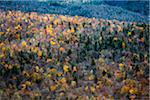 Trees with Autumn Leaves Interspersed with Bare Trees on Mountainside, White Mountain National Forest, White Mountains, New Hampshire, USA Stock Photo - Premium Rights-Managed, Artist: R. Ian Lloyd, Code: 700-06465683