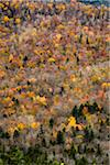 Trees with Autumn Leaves Interspersed with Bare Trees on Mountainside, White Mountain National Forest, White Mountains, New Hampshire, USA Stock Photo - Premium Rights-Managed, Artist: R. Ian Lloyd, Code: 700-06465688