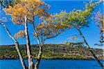 Trees with Leaves in Autumn Transition Surrounding Jordan Pond, Acadia National Park, Mount Desert Island, Hancock County, Maine, USA Stock Photo - Premium Rights-Managed, Artist: R. Ian Lloyd, Code: 700-06465719