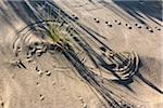 Grass in Sand with Animal Tracks Stock Photo - Premium Rights-Managed, Artist: R. Ian Lloyd, Code: 700-06465806