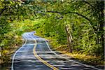 Windy Road Through Forest, Race Point, Cape Cod, Massachusetts, USA Stock Photo - Premium Rights-Managed, Artist: R. Ian Lloyd, Code: 700-06465810