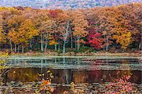 fall trees lake - Ashokan Reservoir, near Olive, Ulster County, New York State, USA Stock Photo - Premium Rights-Managednull, Code: 700-06465833