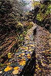 Trail and Wet Leaves, Watkins Glen State Park, Schuyler County, New York State, USA Stock Photo - Premium Rights-Managed, Artist: R. Ian Lloyd, Code: 700-06465848