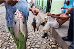 Man Carrying Freshly Caught Fish, Trinidad, Cuba Stock Photo - Premium Rights-Managed, Artist: R. Ian Lloyd, Code: 700-06465980