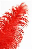 feather  close-up - A red feather. Stock Photo - Premium Royalty-Freenull, Code: 6102-06470601