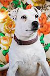 White dog looking away Stock Photo - Premium Royalty-Free, Artist: urbanlip.com, Code: 6102-06470855