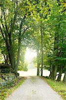 forward - Treelined path Stock Photo - Premium Royalty-Freenull, Code: 6102-06470991