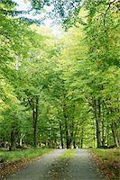 forward - Path through forest Stock Photo - Premium Royalty-Freenull, Code: 6102-06470993