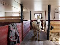 equestrian - Horse in stable Stock Photo - Premium Royalty-Freenull, Code: 6102-06471071