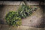 Two Christmas trees on the pavement waiting to be collected by the garbage collectors Stock Photo - Royalty-Free, Artist: Dutourdumonde                 , Code: 400-06485841