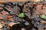 Norway Spruce (Picea abies) Seedlings Growing in Old Wood, Upper Palatinate, Bavaria, Germany Stock Photo - Premium Royalty-Free, Artist: David & Micha Sheldon, Code: 600-06486328