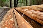 Pile of Logs Stripped for Timber by Side of Road, Bavaria, Germany Stock Photo - Premium Rights-Managed, Artist: David & Micha Sheldon, Code: 700-06486599
