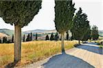 Rural Road with Cypress Trees in Summer, Pienza, Val d'Orcia, Province of Siena, Tuscany, Italy Stock Photo - Premium Royalty-Free, Artist: Raimund Linke, Code: 600-06486640