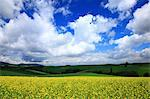 Flower field in Biei, Hokkaido Stock Photo - Premium Royalty-Free, Artist: JTB Photo, Code: 622-06487167