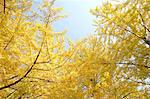 Yellow leaves Stock Photo - Premium Royalty-Free, Artist: Cusp and Flirt, Code: 622-06487745